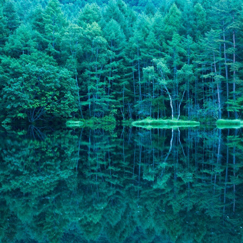 森林のような静寂