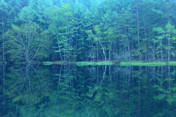 森のような静寂