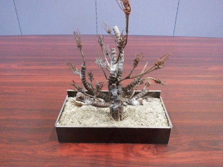 鉄筋棒と針金を溶接で合わせた盆栽